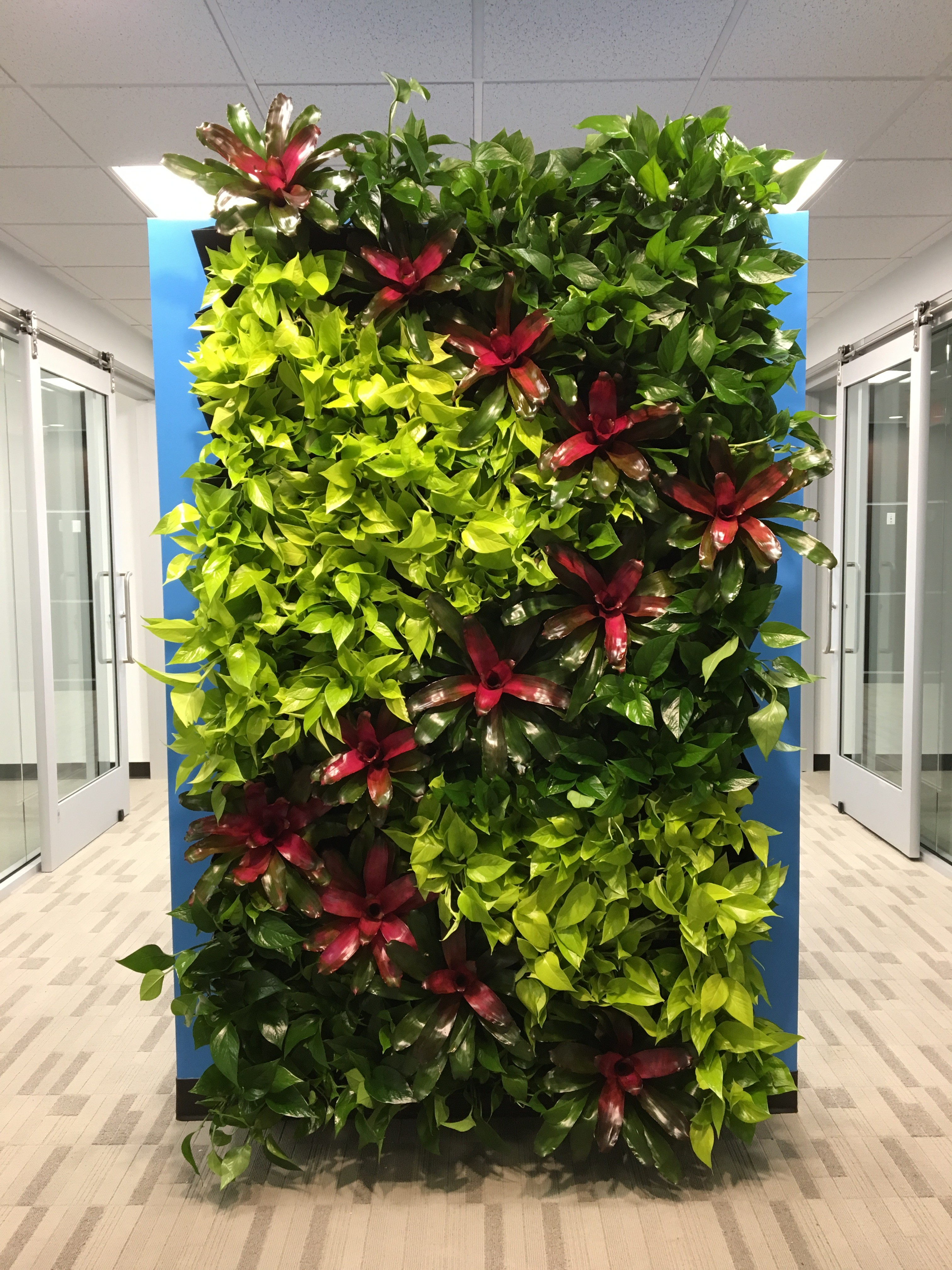 Green living walls are perfect for any space plant pros - How to make a living wall ...